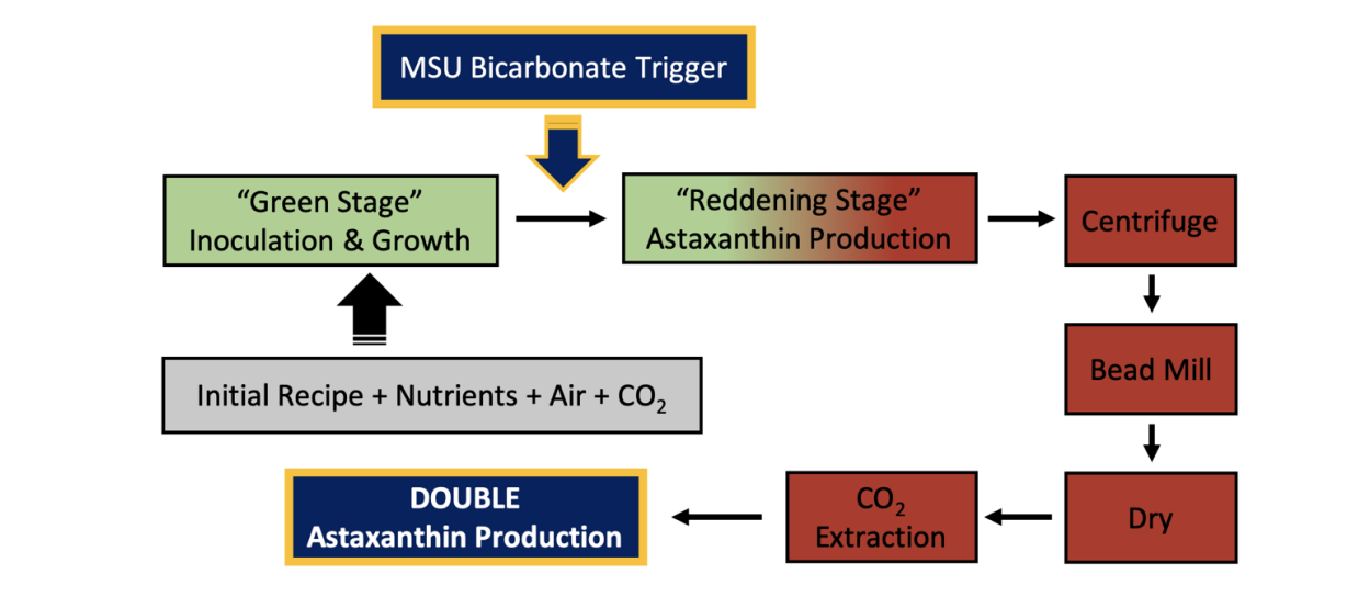 Diagram of Astaxanthin production
